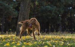 Σκυλί στο δάσος φθινοπώρου Στοκ φωτογραφία με δικαίωμα ελεύθερης χρήσης