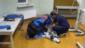 Σκυλί στο δωμάτιο ακτίνας X Στοκ φωτογραφίες με δικαίωμα ελεύθερης χρήσης