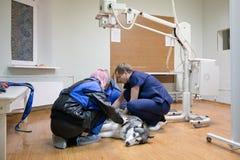 Σκυλί στο δωμάτιο ακτίνας X Στοκ εικόνα με δικαίωμα ελεύθερης χρήσης