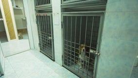 Σκυλί στο κλουβί μετά από τη χειρουργική επέμβαση Στοκ εικόνες με δικαίωμα ελεύθερης χρήσης