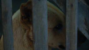 Σκυλί στο κλουβί απόθεμα βίντεο