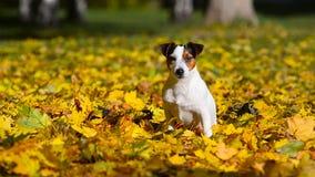 Σκυλί στο πάρκο φθινοπώρου απόθεμα βίντεο