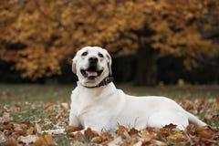 Σκυλί στο πάρκο Στοκ Εικόνες