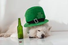 Σκυλί στο πράσινο καπέλο με το μπουκάλι μπύρας Στοκ φωτογραφία με δικαίωμα ελεύθερης χρήσης