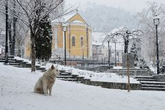 Σκυλί στο τετράγωνο πόλεων Στοκ φωτογραφίες με δικαίωμα ελεύθερης χρήσης
