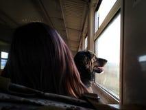 Σκυλί στο τραίνο στοκ φωτογραφίες με δικαίωμα ελεύθερης χρήσης