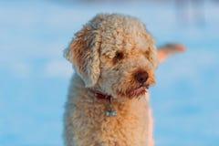 σκυλί συμπαθητικό Στοκ Φωτογραφία