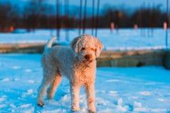 σκυλί συμπαθητικό Στοκ εικόνα με δικαίωμα ελεύθερης χρήσης