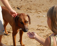σκυλί σχετικά με τη γυναί&ka Στοκ Φωτογραφία