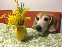 Σκυλί την ημέρα women's στοκ εικόνες