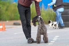 Σκυλί της κινηματογράφησης σε πρώτο πλάνο τεριέ Στοκ φωτογραφία με δικαίωμα ελεύθερης χρήσης