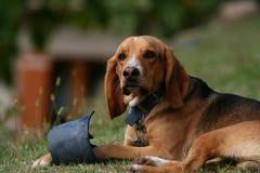 σκυλί το παιχνίδι του Στοκ φωτογραφία με δικαίωμα ελεύθερης χρήσης