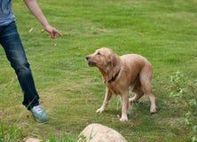 Σκυλί τραίνων Στοκ εικόνες με δικαίωμα ελεύθερης χρήσης