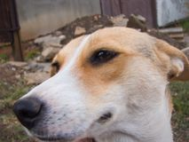 σκυλί υπαίθριο Στοκ φωτογραφία με δικαίωμα ελεύθερης χρήσης