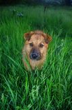 σκυλί φωτογραφικών μηχανώ&n στοκ φωτογραφίες με δικαίωμα ελεύθερης χρήσης