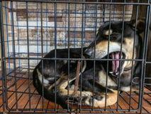 Σκυλί χασμουρητού σε ένα κλουβί στοκ φωτογραφία με δικαίωμα ελεύθερης χρήσης