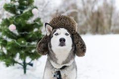 Σκυλί Χριστουγέννων με τη γούνα ΚΑΠ με τα χτυπήματα αυτιών Στοκ Εικόνα