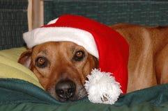 σκυλί Χριστουγέννων Στοκ Εικόνα