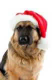 σκυλί Χριστουγέννων Στοκ Φωτογραφία