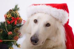 σκυλί Χριστουγέννων στοκ εικόνες
