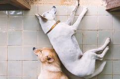 Σκυλί ύπνου στο topview Στοκ φωτογραφία με δικαίωμα ελεύθερης χρήσης