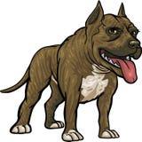 σκυλί διασταυρώσεων pitbull Στοκ Εικόνες