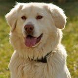 σκυλί 001 Στοκ φωτογραφίες με δικαίωμα ελεύθερης χρήσης