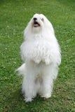 σκυλί Στοκ Εικόνες