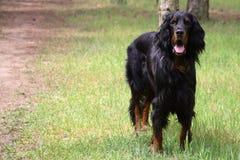 σκυλί Στοκ Εικόνα
