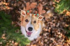 Σκυλί Christams στοκ φωτογραφίες με δικαίωμα ελεύθερης χρήσης