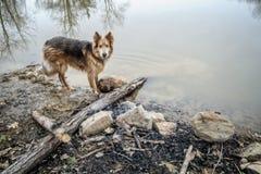 Σκυλί Colley Huskie εκτός από έναν ποταμό στοκ φωτογραφία με δικαίωμα ελεύθερης χρήσης