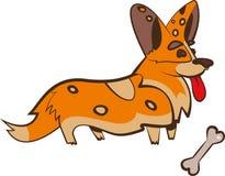 Σκυλί Corgi αλεπούδων στοκ φωτογραφία με δικαίωμα ελεύθερης χρήσης