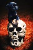 Σκυλί Griffon στον ανθίζοντας θερινό κήπο Στοκ φωτογραφίες με δικαίωμα ελεύθερης χρήσης