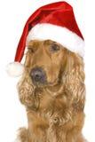σκυλί hubcap Στοκ φωτογραφία με δικαίωμα ελεύθερης χρήσης