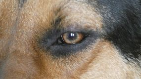 Σκυλί 17 Huntaway στοκ εικόνες