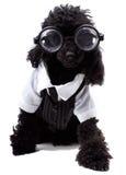 σκυλί nerd Στοκ φωτογραφία με δικαίωμα ελεύθερης χρήσης