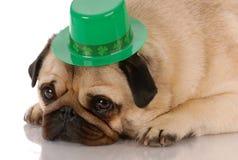 σκυλί patricks ST ημέρας Στοκ εικόνα με δικαίωμα ελεύθερης χρήσης