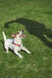 σκυλί playfull Στοκ Εικόνες