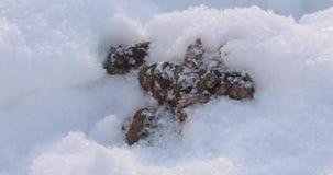 Σκυλί shit στο χιόνι απόθεμα βίντεο