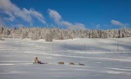 Σκυλί Sledding στην Ελβετία Στοκ Φωτογραφίες