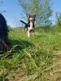Σκυλί Smily Στοκ φωτογραφίες με δικαίωμα ελεύθερης χρήσης