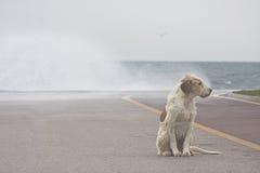 σκυλί strom Στοκ φωτογραφίες με δικαίωμα ελεύθερης χρήσης