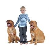 σκυλιά αγοριών δικοί του Στοκ Φωτογραφίες