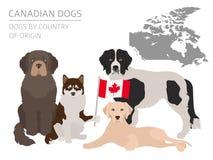 Σκυλιά από τη χώρα προέλευσης Καναδικές φυλές σκυλιών Temp Infographic απεικόνιση αποθεμάτων