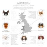 Σκυλιά από τη χώρα προέλευσης Φυλές σκυλιών Walsh Infographic templat διανυσματική απεικόνιση