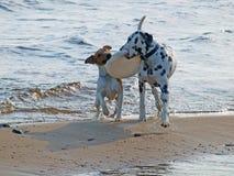 σκυλιά δύο Στοκ φωτογραφία με δικαίωμα ελεύθερης χρήσης