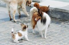 σκυλιά επικοινωνίας Στοκ φωτογραφία με δικαίωμα ελεύθερης χρήσης