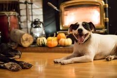 Σκυλιά ημέρας των ευχαριστιών κοντά στην εστία Στοκ Εικόνα