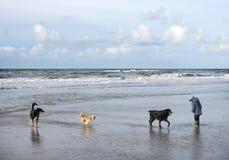 Σκυλιά και παιδί στην παραλία Βόρεια Θαλασσών στην Ολλανδία Στοκ φωτογραφία με δικαίωμα ελεύθερης χρήσης