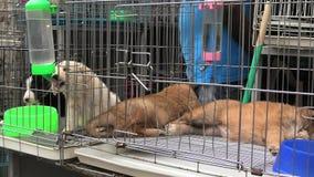 Σκυλιά κουταβιών στην κατανάλωση κλουβιών απόθεμα βίντεο